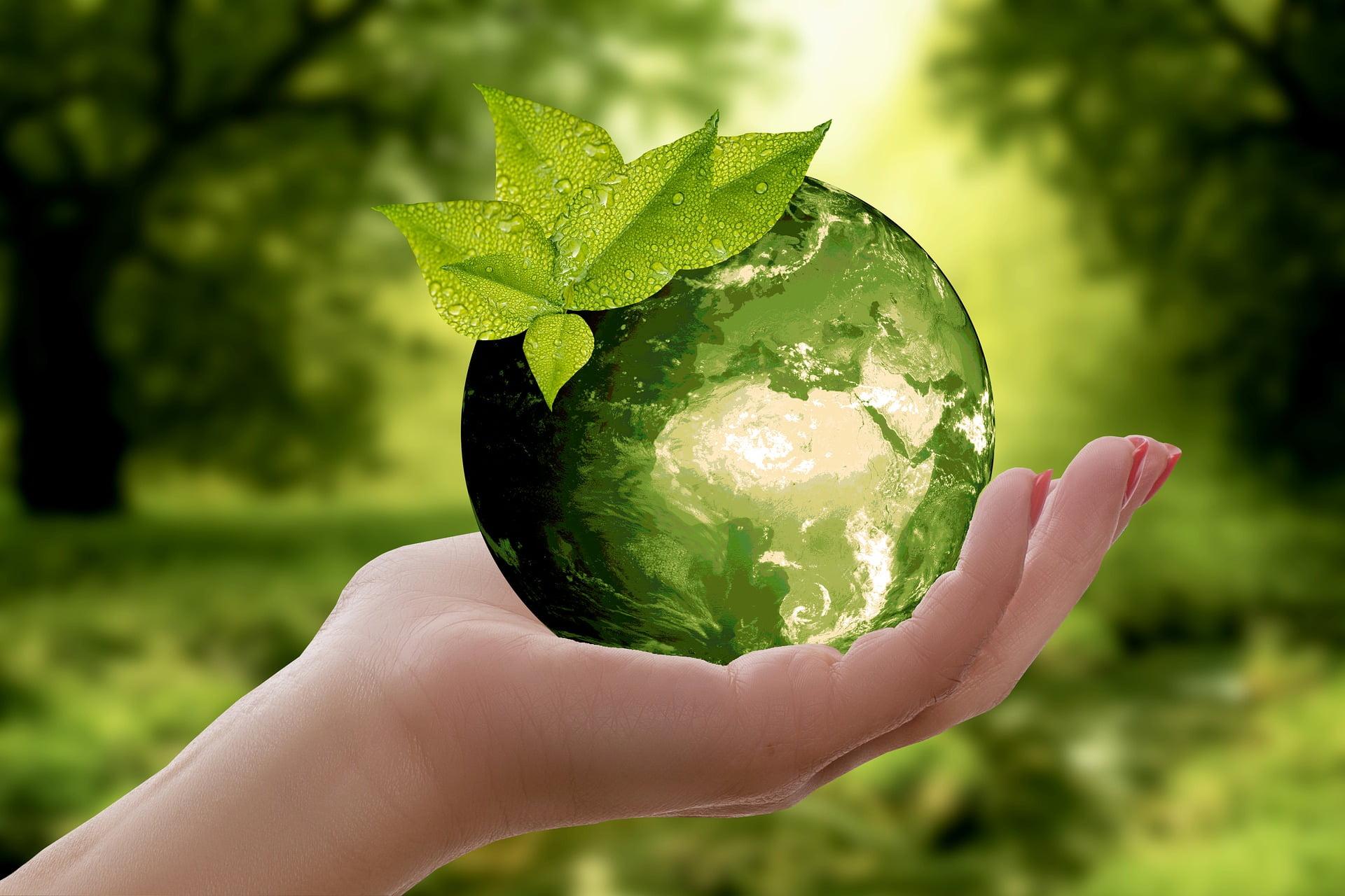 movimento-vadelata-promove-green-week-diferente-da-black-friday